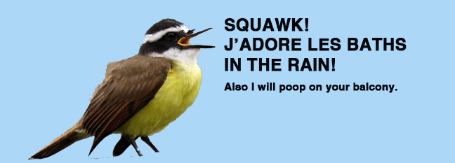 pooper bird speaks