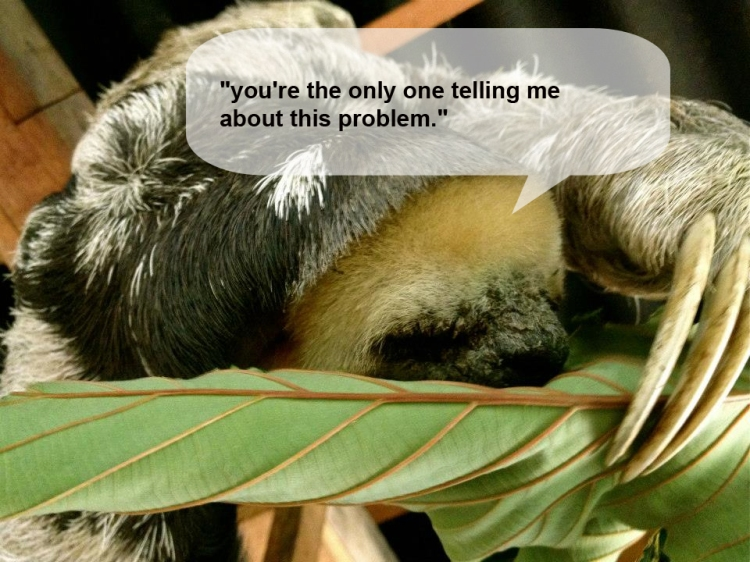 sloth with caption 1